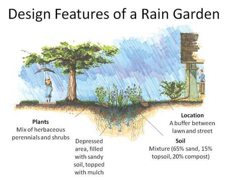 Design features of a rain garden